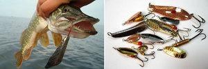 Почему рыба не клюет? Разбираем основные причины неудач на рыбалке