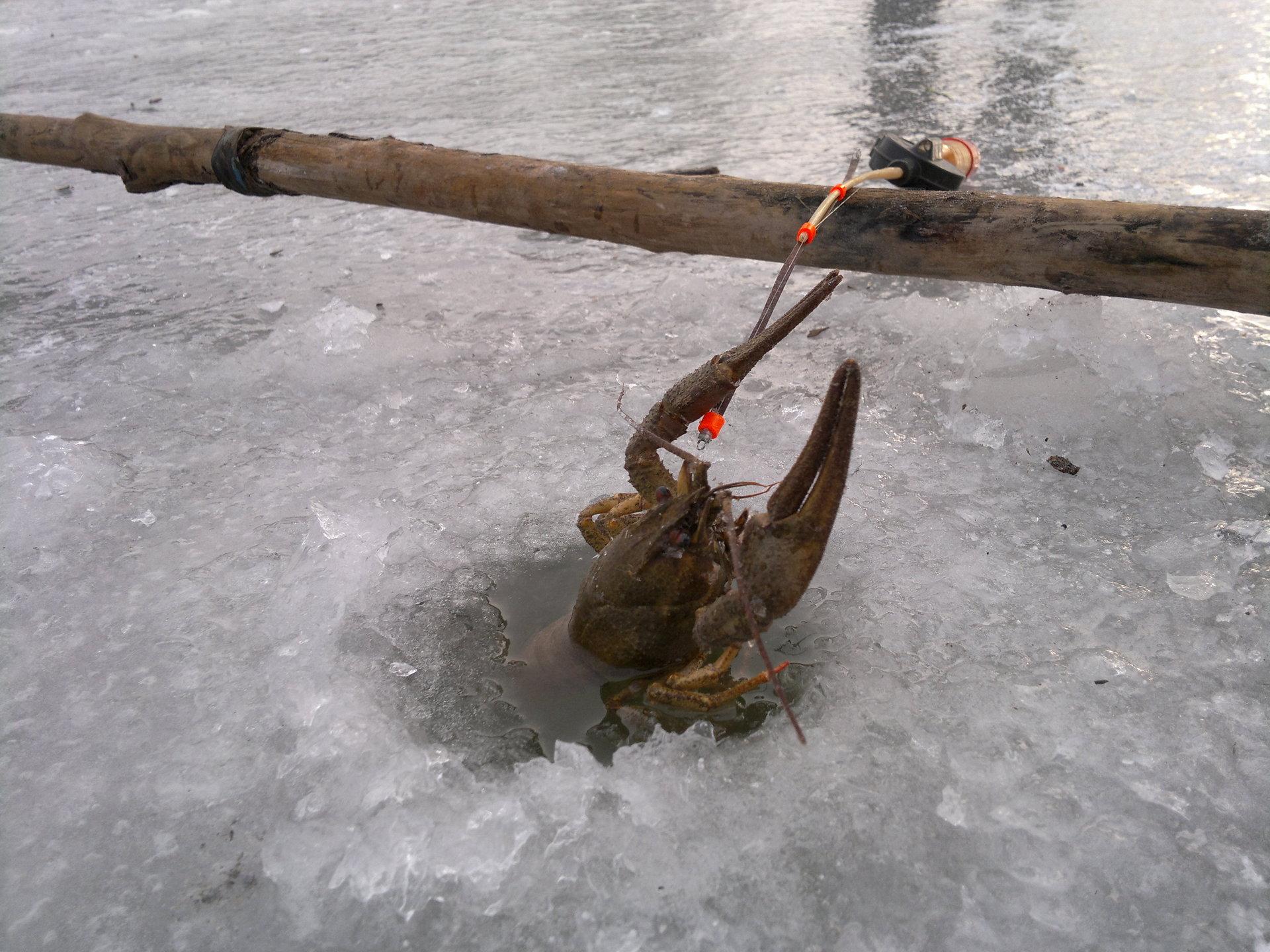 Волокуша для ловли раков своими руками фото 629