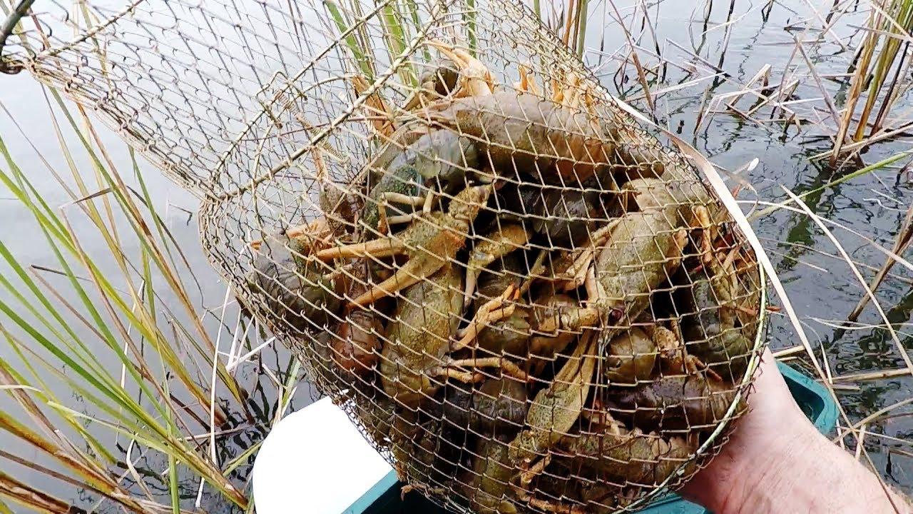 Волокуша для ловли раков своими руками фото 66