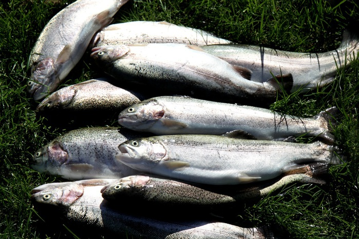 Рыбалка бисерово озеро отзывы
