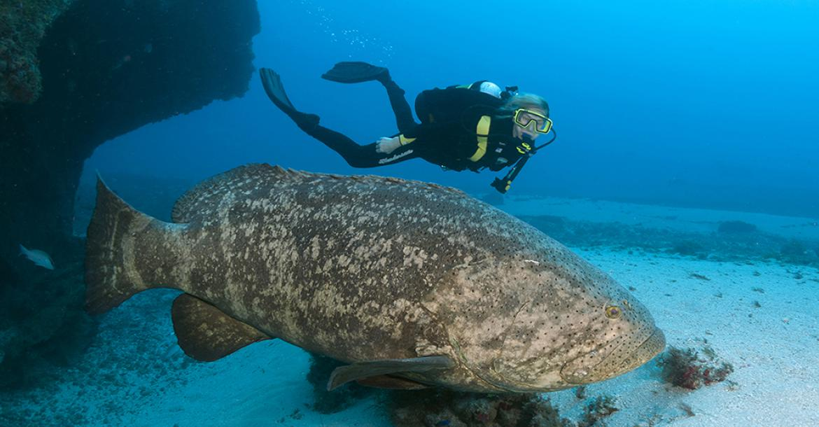 self proclaimed grouper capital of the world - 1170×610