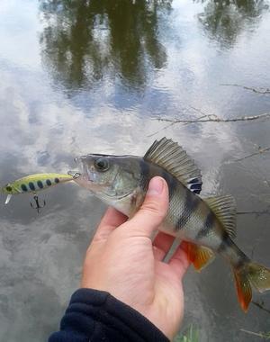 Как ловить рыбу на живца в зимнее время