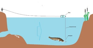 Как ловить сома на спиннинг с берега или лодки