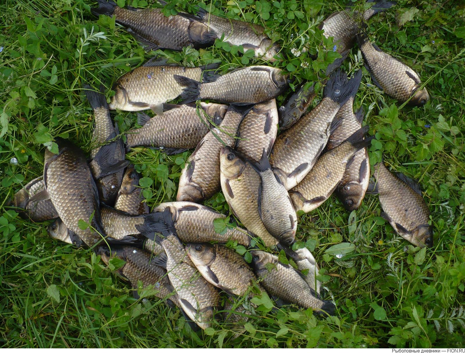 Рыбалка на озере паршинское тверская область